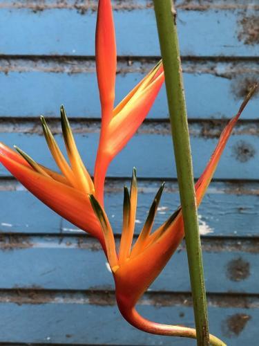 Color Study in the Tropics