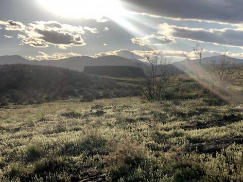 Mesa Meadow