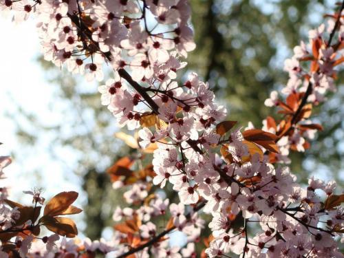 East Coast Spring