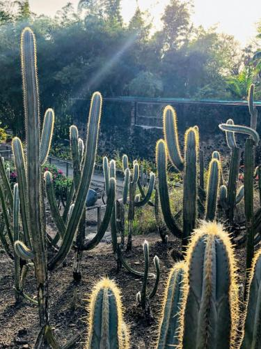 Light on the Prickles